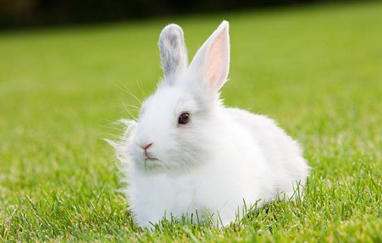 兔子最爱吃的东西是什么 兔子喜欢吃什么-轻博客