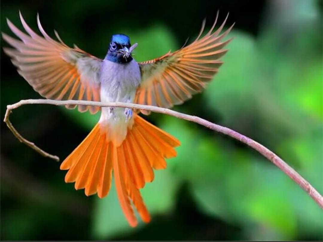 练鹊是喜鹊吗 练鹊是不是喜鹊