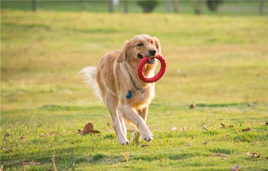 怎么训练狗狗不乱叫 训练狗狗不乱叫的方法