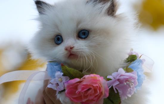 猫咪能活几年 猫咪能活多久