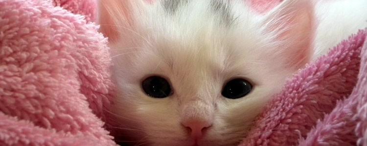 两个月大的猫可以自己睡吗 两个月的猫能自己睡吗