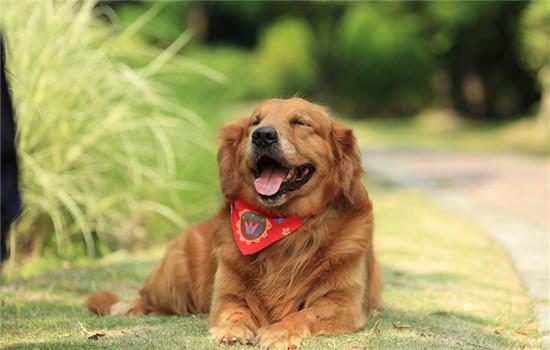 怎么辨别狗瘟症状 狗瘟有哪些症状