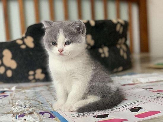 小猫舔你代表什么插图