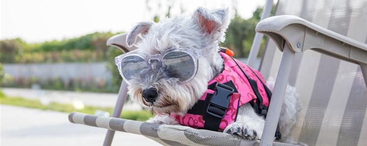 狗狗最怕什么气味 狗狗怕什么气味致死