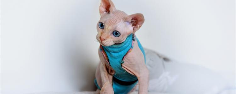猫咪刚到家怕生躲起来怎么办 猫咪怕见生人就躲起来