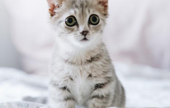 领养一岁的猫咪能养熟吗 领养一岁的猫咪可不可以养熟插图(1)