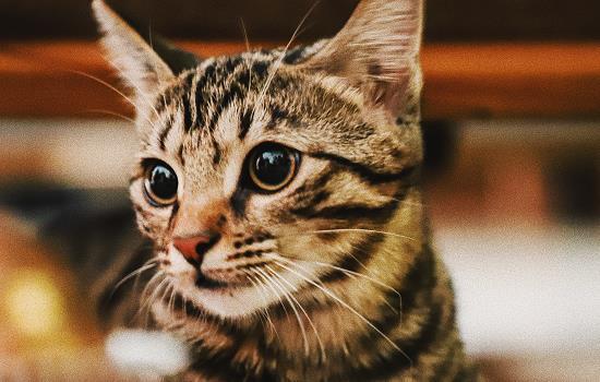 猫咪多大做绝育 猫咪多大做绝育比较好插图(1)