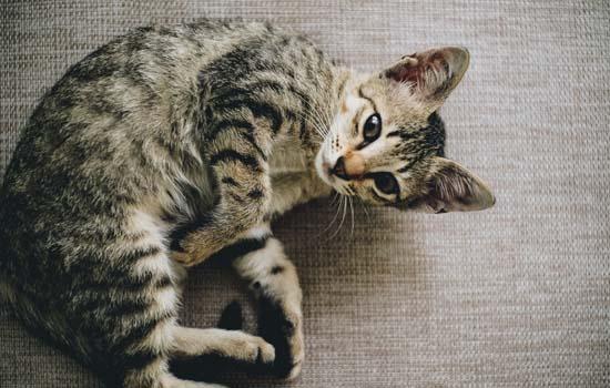 猫吃老鼠吗 猫真的吃老鼠吗