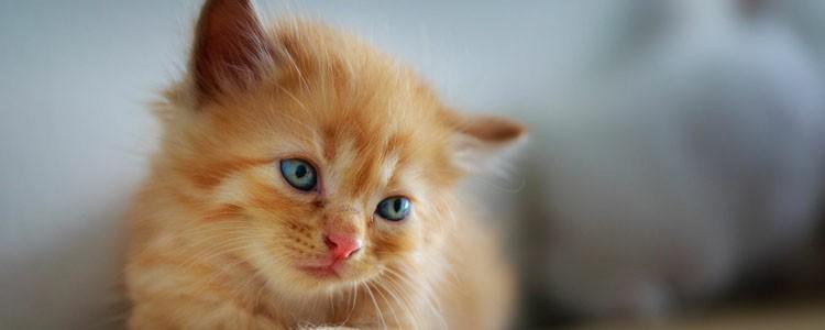 猫咪多大能洗澡