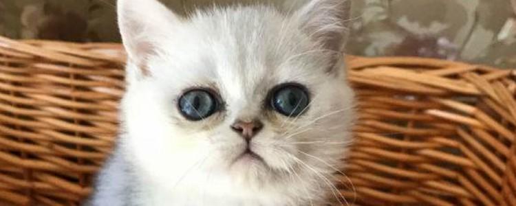 小猫到新家的应激反应有哪些
