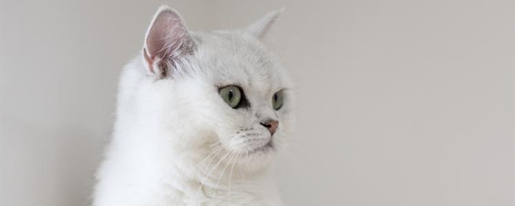 小猫一个月可以送人吗