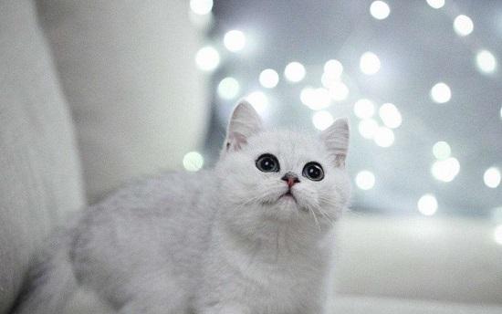 宠物猫咬人怎样教育插图(1)