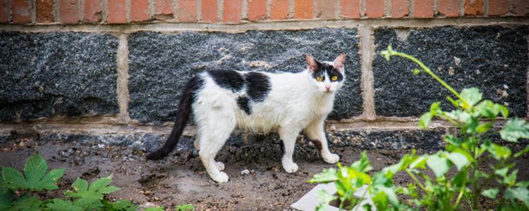 猫咪绝育应激反应症状