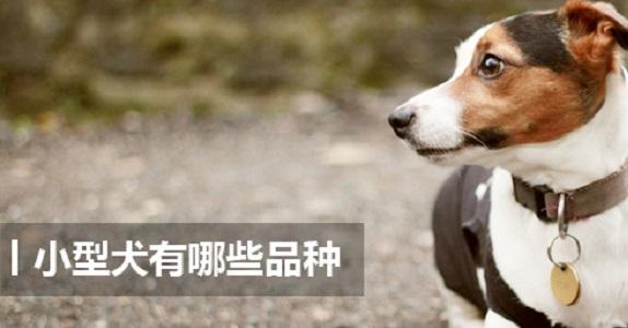 小型犬有哪些品种 小型犬品种大全