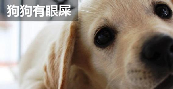 狗狗有眼屎怎么回事啊