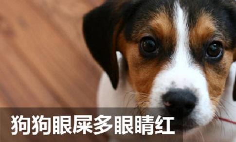 狗狗眼屎多眼睛红