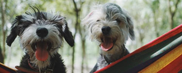 母狗狗怀孕的症状 母狗狗怀孕的症状有哪些