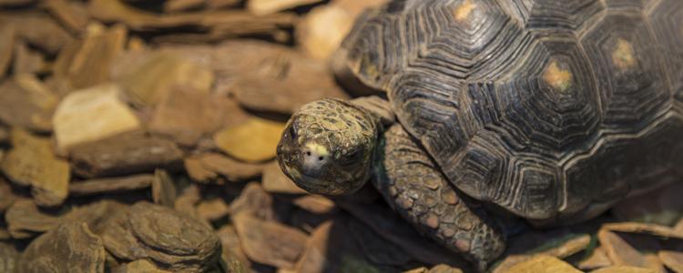 龟的寿命 龟的寿命有多长
