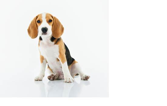 大连禁养犬种2020 大连48种禁养犬-轻博客