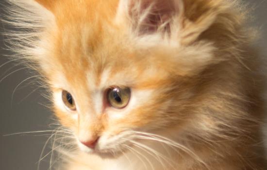 猫咪能接受30度高温吗插图(1)