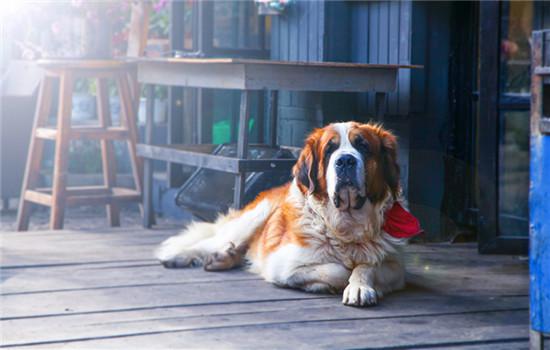 北京养犬管理条例2020 北京市养犬管理条例2020