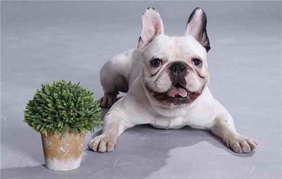 天津养犬管理条例2020 天津市养犬管理条例2020
