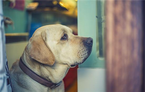 上海市养犬管理条例2020 上海市养犬管理条例最新
