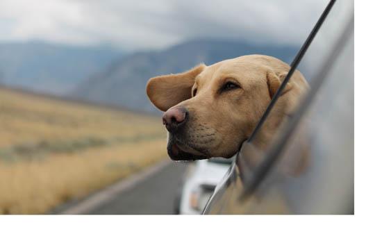 贵州城市养犬管理规定 贵州省城市养犬管理规定