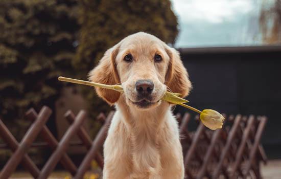 河南养犬管理条例 河南养犬管理规定