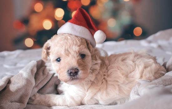 内蒙古城市养犬管理条例 内蒙古养犬管理条例2019
