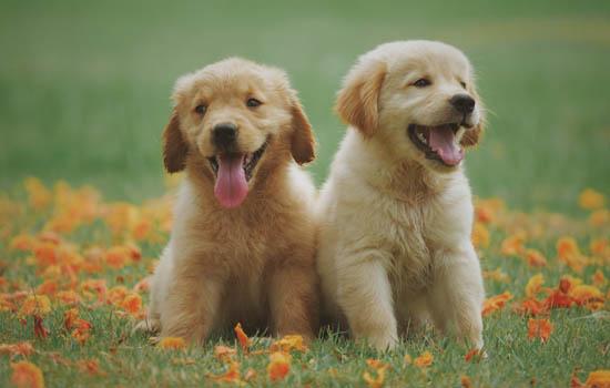 福建养犬管理条例2019 福建养犬管理规定