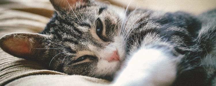 母猫生产前会一直睡觉吗