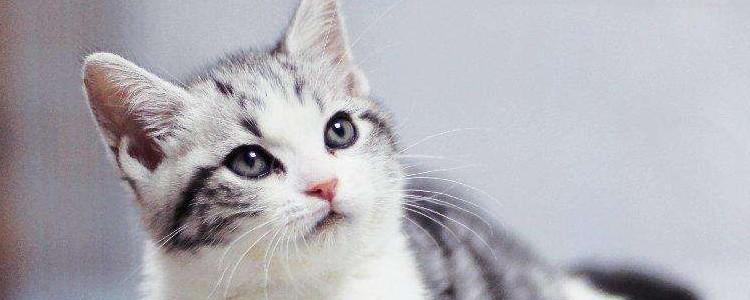 训猫教程猫咪养多久开始训练