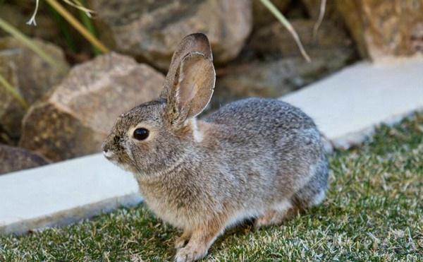 兔子一年能生几窝-轻博客