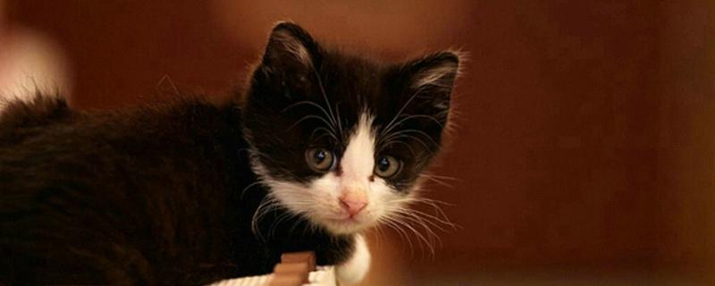 母猫要绝育吗