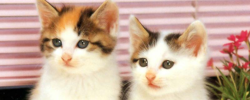 小猫呼噜呼噜是怎么了