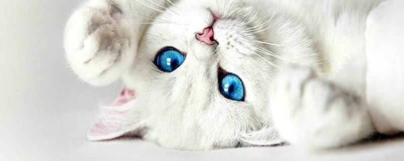 小奶猫一直叫怎么办