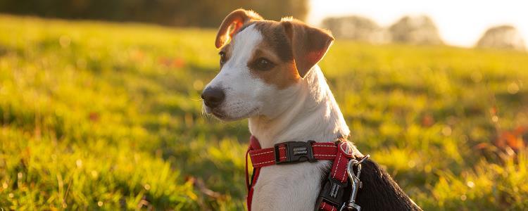 狗狗生产后小狗狗注意些什么