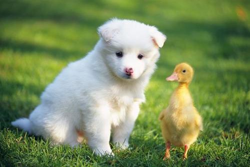 养只宠物有多花钱
