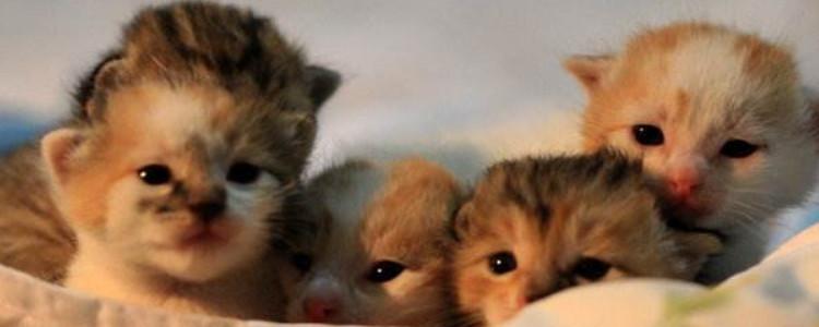 养猫卖崽能挣钱么