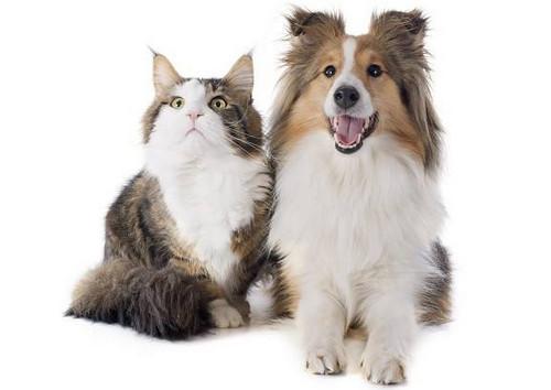 养猫费钱还是养狗费钱