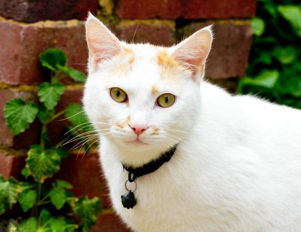 猫体外驱虫用什么药