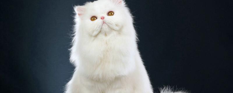 小猫感冒了有什么症状