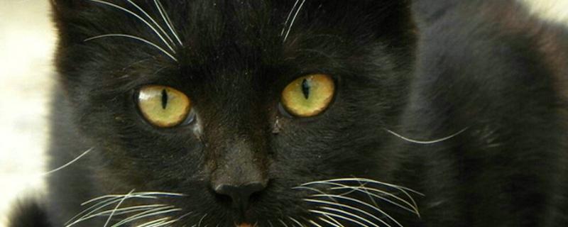 猫咪几个月打疫苗