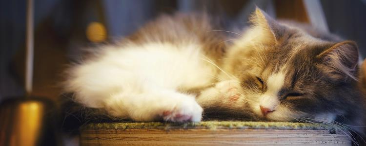 猫呼呼的声音怎么回事