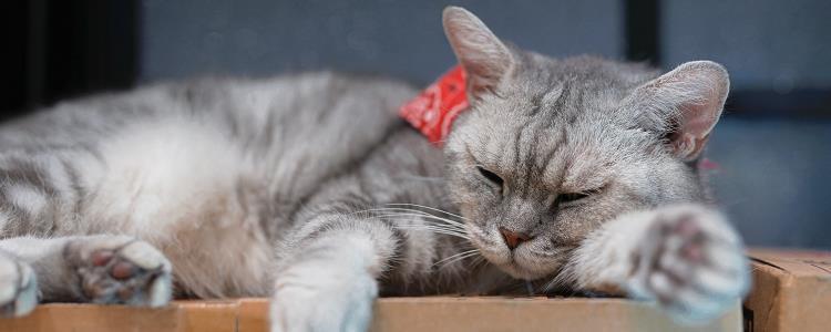 猫吃长绳子几天能排出