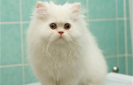 猫喜欢吃纸巾怎么办