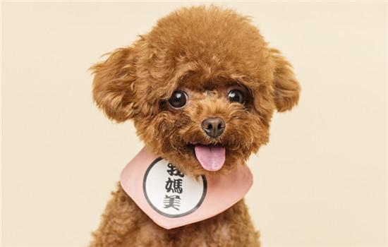 云浮城市养犬管理条例