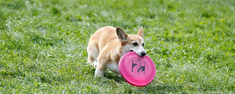 狗狗吃完驱虫药的反应
