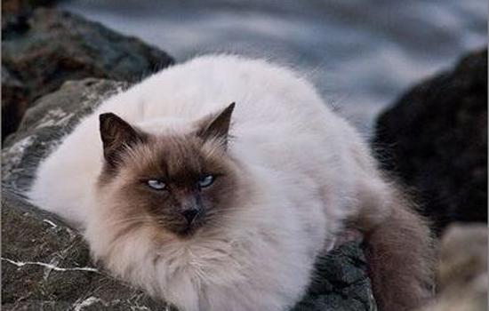 猫咪可以挨着人睡吗